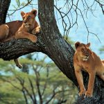 Eco Tours Africa